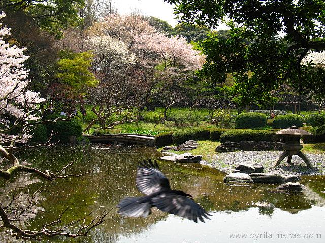 Photos du japon for Le jardin imperial marines de cogolin