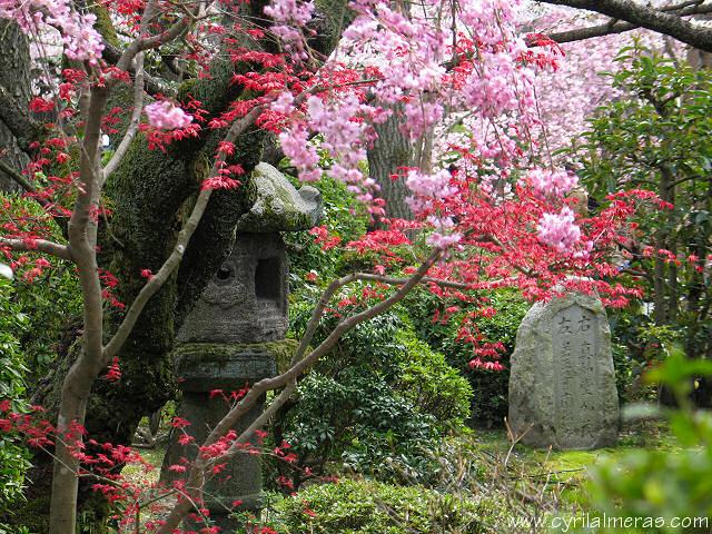 Photos du japon for Jardin kyoto
